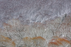 Tavolaro Silvio ( Italian ) - Winter forest || Highly commended