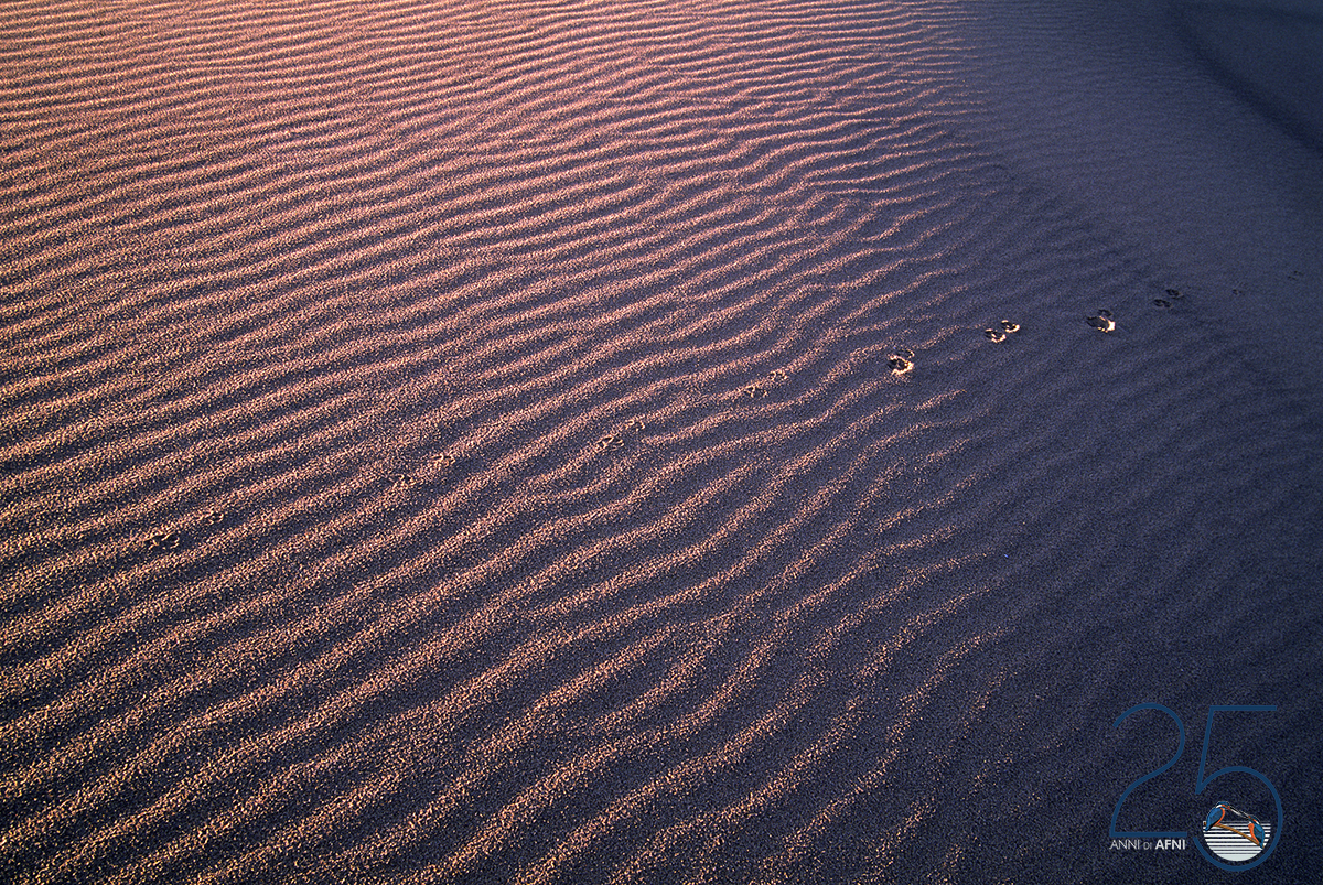Antonio Forma : Piscinas tracce sulla duna
