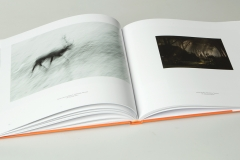 libro_boschi_08