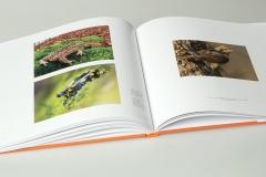 libro_boschi_11