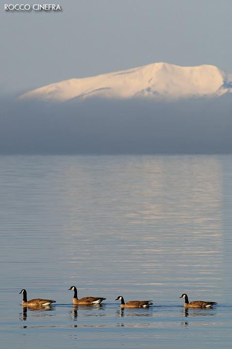 15-canada-goose-lake-yellowstone