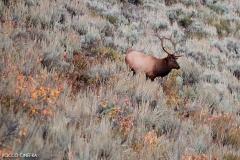 03-elk