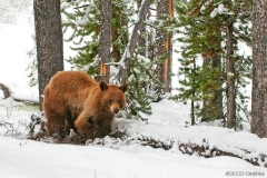 11-black-bear