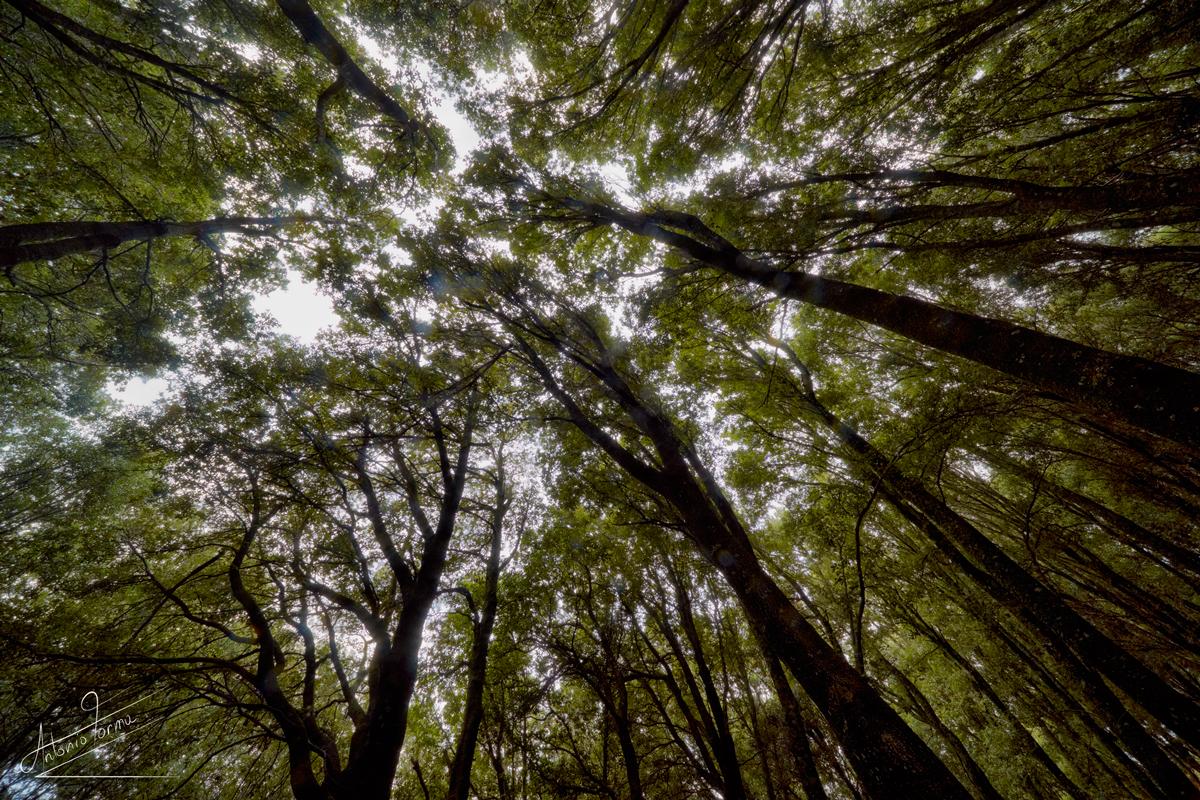Foresta demaniale di Montes.