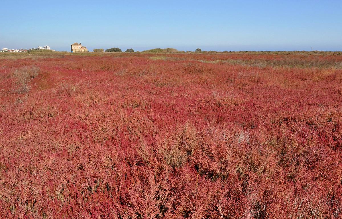 Giovanni Piccinini – La prateria salata in autunno