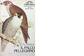 ip58_falcopellegrino