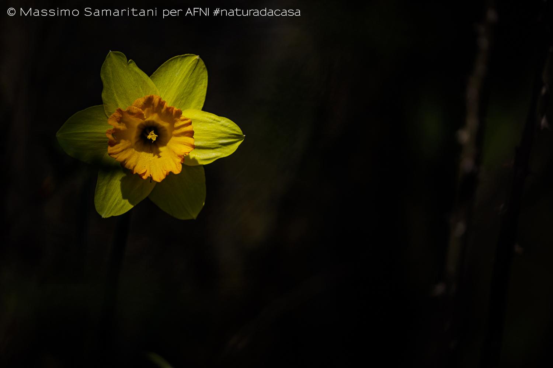 20200319-Samaritani