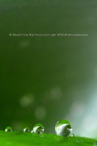 20200328-Bartoccioni