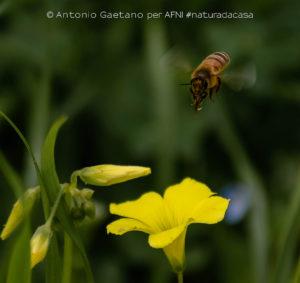 20200405-Gaetano
