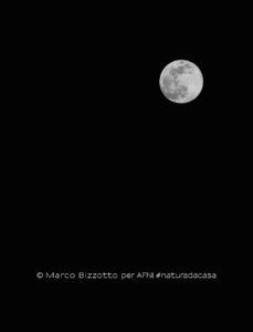 20200407-Bizzotto