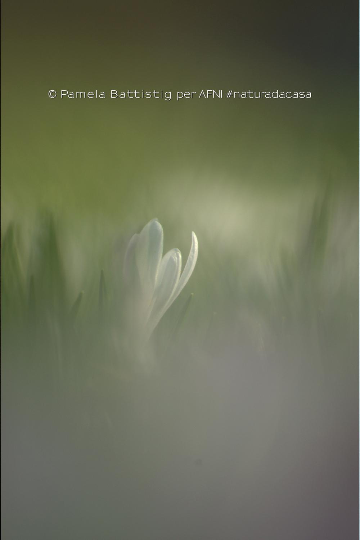 20200425-Battistig