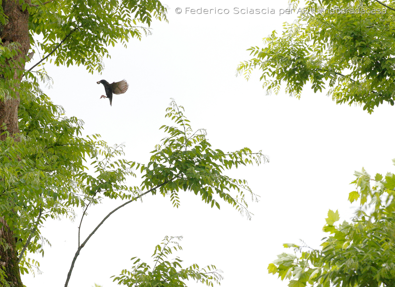 20200428-Sciascia