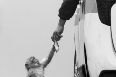 Gatto Saverio ( Italian ) - A Helping Hand || Category winner