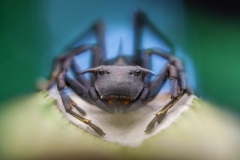 Aznar González de Rueda Javier ( Spanish ) - Spider taking care of the egg sac || Highly commended