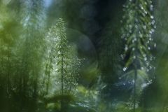 Katarzyna Gubrynowicz - POLAND - Piccola foresta nella grande foresta / A small forest in a big one    Highly commended