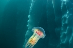 Galice Hoarau - FRANCE - Ghiaccio e medusa / Ice and jellyfish || Highly commended