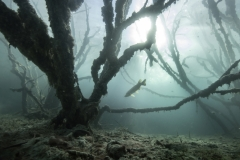 Jose Pesquero - SPAIN - Foresta sott'acqua / Underwater forest || Highly commended
