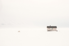 Marcin Dobas - POLAND - Un ospite curioso / Curious guest || Highly commended