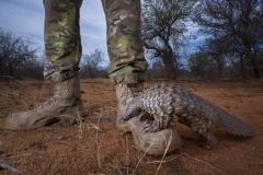 Neil Aldridge - SOUTH AFRICA - Il pangolino e la sua guardia  / Pangolin and his protector || Highly commended