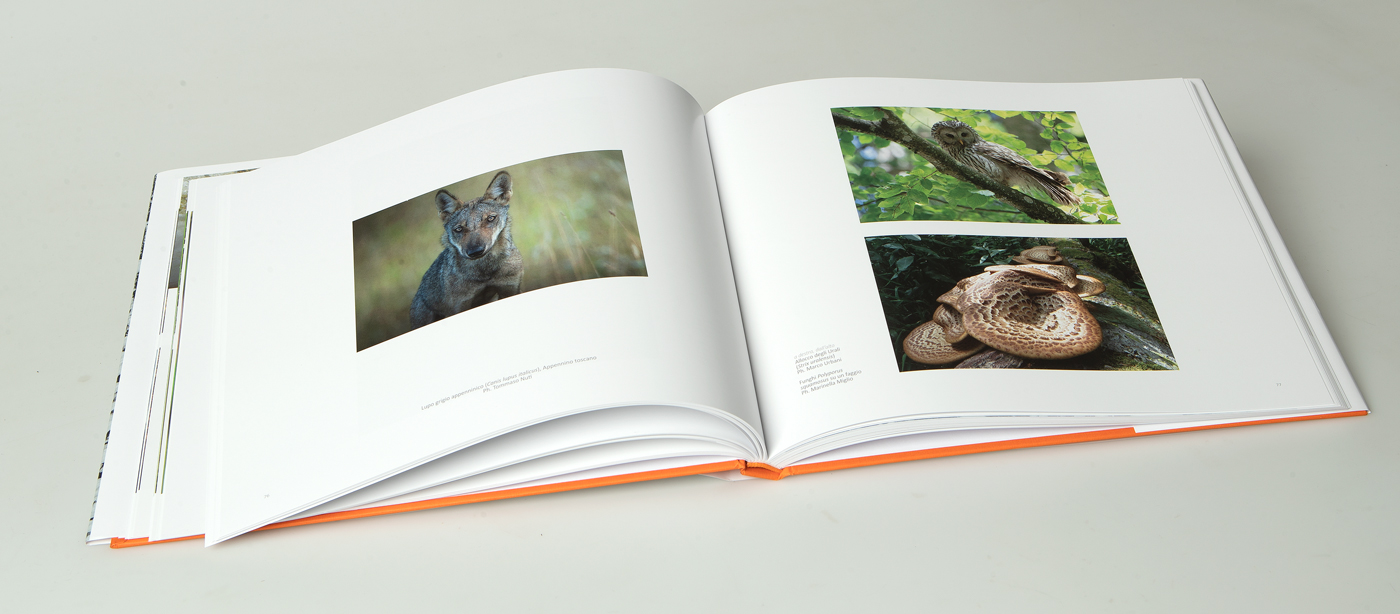 libro_boschi_05