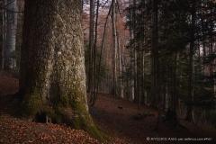 Autumn110
